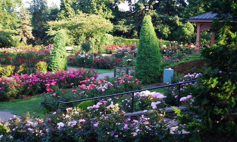 Gardening blog - Gardening in Washington State ...